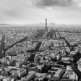 paris by Adrian Podaru - City,  Street & Park  Skylines ( paris, eiffel tower, black and white, rooftop, cityscape,  )