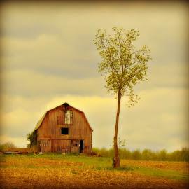 Lazy Sunday Morning by Jacquie G - Landscapes Prairies, Meadows & Fields ( field, barn, digital art farm scene, sapling )
