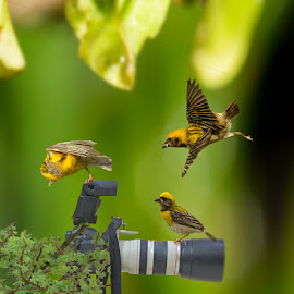 by Mukesh Chand Garg - Animals Birds ( camera, lens, object,  )