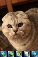 Screenshot of Cute cat wallpaper
