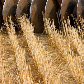 This was taken on my Palouse Patterns tour today. A different take on harvest in the Palouse. I started by taking the whole piece of equipment and kept funneling my focus closer and closer. This was the final result. by Gale Perry - Abstract Patterns ( tiller close up with wheat stubble. )