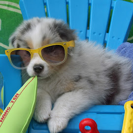 Surfs Up! by Kristi Muck - Animals - Dogs Puppies