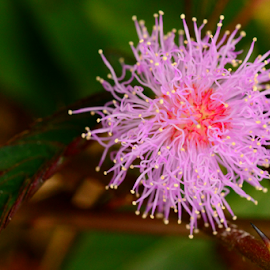 by Ravi Kashyap - Nature Up Close Other plants