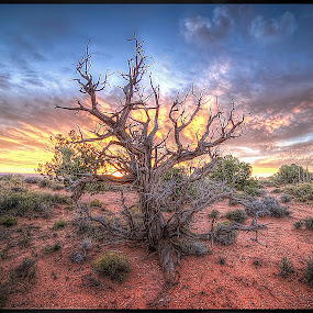 Fire Tree by Bruce Martin - Landscapes Sunsets & Sunrises