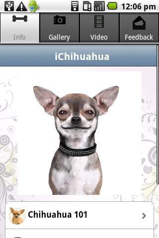 iChihuahua