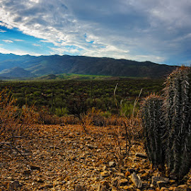 Cactus and Mountains by Aaron Smith - Landscapes Deserts ( clouds, novelties, desert, mountain, dry, arid, landscape, sky, nature, cacti, empty, lonely, cactus,  )