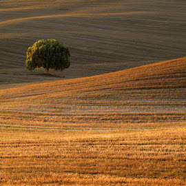 Alone by Federico Gentili - Landscapes Prairies, Meadows & Fields ( tuscany, tree, sunset, horizontal, solely, one, no person, italy, alone, sun, fields )