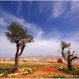 Samaria (Shomron) by David Solodar - Landscapes Deserts ( samaria, shomron )