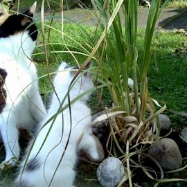 Copy cat by Lyz Amer - Animals - Cats Kittens ( kitten )