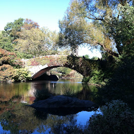 Central Park by Beth Hartung - Novices Only Landscapes