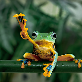 Whats up bro ?? by Robert Cinega - Animals Amphibians
