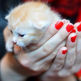 My sister with a cat by Tereza Létalová - Animals - Cats Kittens ( kitten, cat )