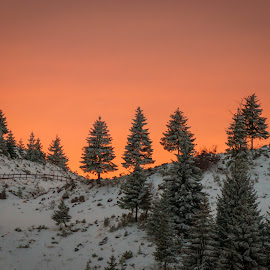 End of the day by Iulian Vulpe - Novices Only Landscapes ( mountain, red, tree, sunset, white, fir, end )