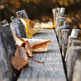 Old Fence by Gabriel Tocu - Artistic Objects Still Life ( still life, artistic objects )