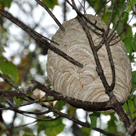 The nest by Whitney Bowley - Nature Up Close Hives & Nests