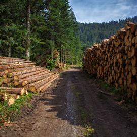 Logs a lot of it by Stanislav Horacek - Landscapes Forests