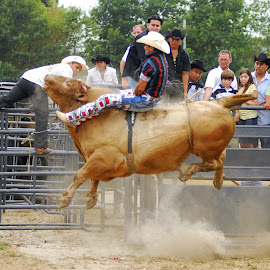by Jeff Fox - Sports & Fitness Rodeo/Bull Riding