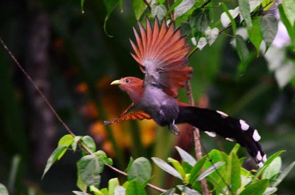 Squirrel Cuckoo Squirrel Cuckoo   Proj...
