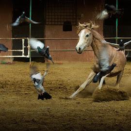 by Alaa Ahmed - Animals Horses