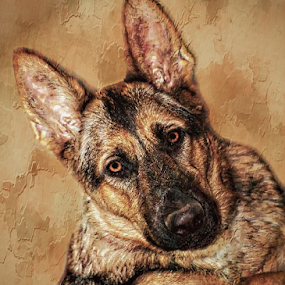 by Dawn Vance - Digital Art Animals ( mouth, german, pack, portrait, eyes, shepherd, family, pet, ears, loyalty, brown, paws, dog, nose, golden, friend, sable, animal )