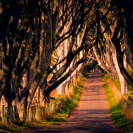 The Dark Hedges by Lawrence Ferreira - Landscapes Forests ( green, mysterious, dark hedges, road, travel, antrim, imaginative, adventure, hedges, dark, trees, northern ireland, ghostly )