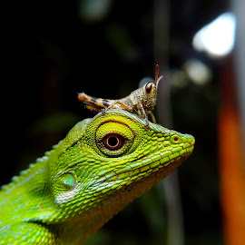 simple ?? by Hendrata Yoga Surya - Instagram & Mobile Android ( bunglon, green crested lizard, londok, belalang, grasshopper )