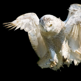Ghost by Stefano Ronchi - Animals Birds