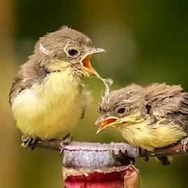 Angry Brother ? by Roy Husada - Animals Birds