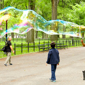 Bubble Man by Alice Gipson - People Musicians & Entertainers ( bubble, street entertainer, alicegipsonphotographs, new york city, central park, public, bench, furniture, object )