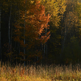 by Deanna Clark - Landscapes Forests
