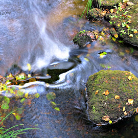 Leaves and water by Gil Reis - Nature Up Close Water ( water, explore, nature, plants, forest, travel, portugal, rivers )