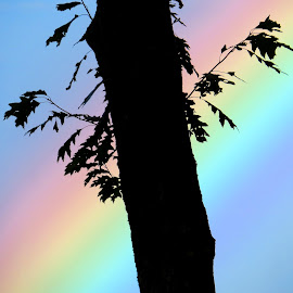 cross by Ian Petersen - Novices Only Flowers & Plants ( oak, silhouette, perspective, lines, rainbow,  )