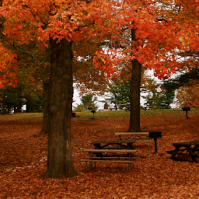 by Liz Okon - City,  Street & Park  City Parks