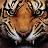 Tiger Roar Pro icon