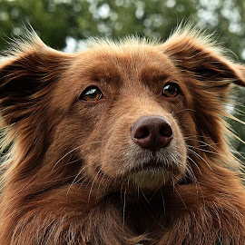 Jente by Marjan Smit - Animals - Dogs Portraits