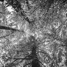 by Sarah Benoit Weir - Nature Up Close Trees & Bushes (  )
