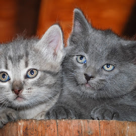 by Rick W - Animals - Cats Kittens