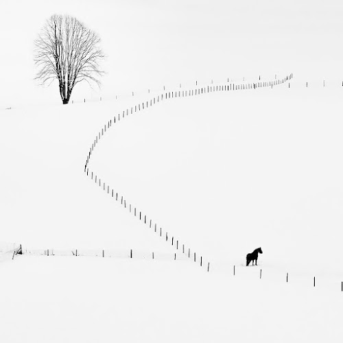 Winter´s Time by Karel Pešek - Black & White Landscapes ( black and white, snow, horse, landscape )