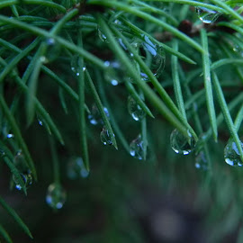 Water drops on leaves by Kathryn Nagelberg - Nature Up Close Other plants