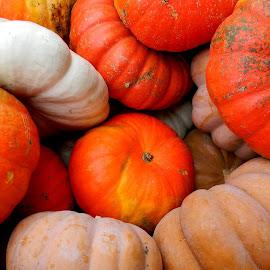 Lovin the pumpkins! by Liz Hahn - Nature Up Close Gardens & Produce