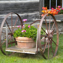 Flower Cart by Kathleen Butke - Novices Only Flowers & Plants