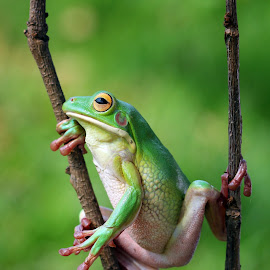 Missed him by Kurito Afsheen - Animals Amphibians