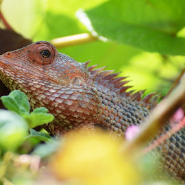 Chameleon by Bavananthan Nithiananthan - Animals Amphibians ( wild, color, change, amphibians, chameleon, animal,  )