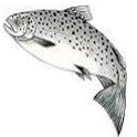 Salmon Count icon