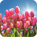 Tulip Field Live Wallpaper