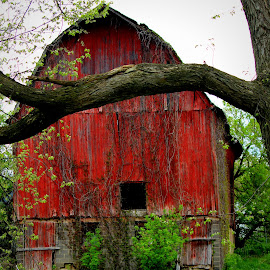 Barn Series #4 by Robert C. Walker - Buildings & Architecture Other Exteriors ( barn architecture, red barn, barn, centennial, country )