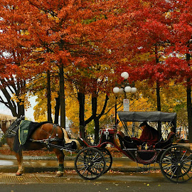 The End of the Season by Ivan Anchev - City,  Street & Park  Street Scenes ( quebec, canada, autumn, carriage, horse, fall, quebec province )