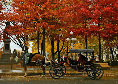 The End of the Season by Ivan Anchev - City,  Street & Park  City Parks ( quebec, canada, autumn, carriage, horse, fall, quebec province )