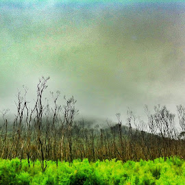 by Mark Strother - Instagram & Mobile iPhone ( fog, outback, wilsons prom, surreal, landscape )
