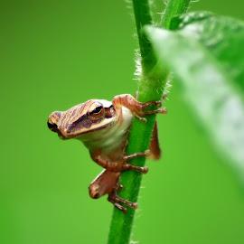 k by Sandi Nopri yanto - Animals Amphibians